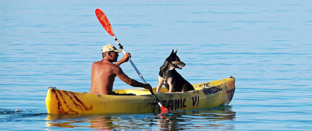 kayak for dogs